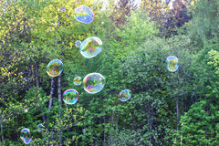 Soap bubble with the reflection on green background. Royalty Free Stock Photo