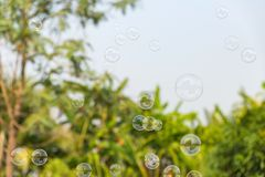 Soap bubbles in the air with natural background royalty free stock photography
