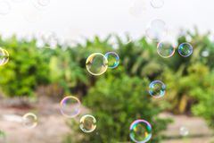 Soap bubbles in the air with natural background stock photos