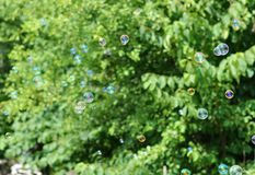 Soap bubbles on a background of green trees Royalty Free Stock Photo
