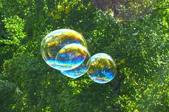 Soap bubbles on the background of trees. royalty free stock photos