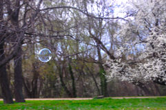 Soap Bubbles. Balloons. On spring background royalty free stock image
