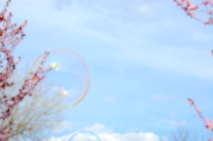 Soap Bubbles. Balloons. On spring background with blossom trees stock images