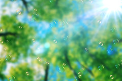 Soap bubbles floating on green nature background under blue sky with sun rays light Royalty Free Stock Photo