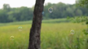 Soap bubbles are flying off the trees in the forest in summer. Soap bubbles flying off the trees in the forest in summer stock video
