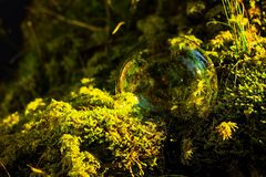 Soap Bubbles in front of the forest in moss Royalty Free Stock Photography