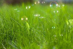 Soap bubbles on green grass Stock Image