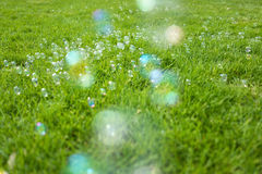 Soap bubbles. Some soap bubbles on meadow Stock Images