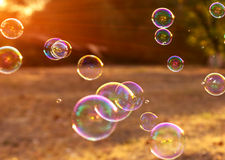 Soap bubbles into the sunset , blurred background . Stock Photo