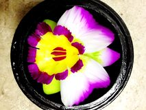 Soap Flower Carvings Royalty Free Stock Photography