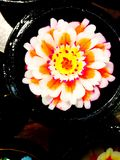 Soap Flower Carvings Royalty Free Stock Images