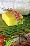 Soap with green fern Royalty Free Stock Image