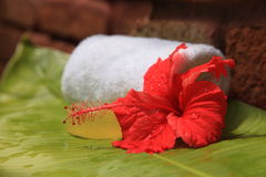 Soap and hibiscus. At a outdooor shower Stock Photos