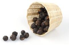 Soap Nut Tree (Sapindus rarak A.DC.) Stock Image