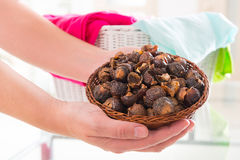 Soap nuts Royalty Free Stock Images