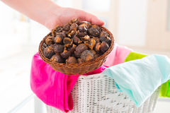 Soap nuts Stock Photos