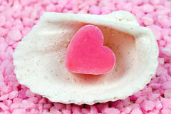 Soap in a shell Stock Images