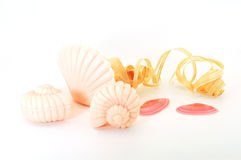 Soap shells. Soaps in shell forms with shells and wood shaving isolated Royalty Free Stock Image
