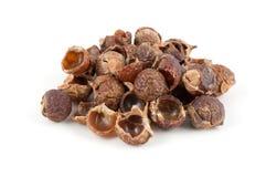 Soapnuts secados isolados no fundo branco imagem de stock