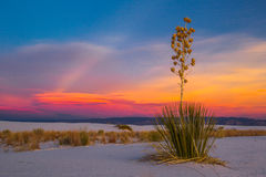 Soaptree Yucca. Seed Pods Against Red Sunset Sky, White Sands National Monument, New Mexico Royalty Free Stock Photos