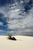 Soaptree Yucca and White Sands. Vertical view of soaptree yucca plant on white sand dunes Stock Photography