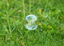 Soapy bubble. On green grass background Stock Images