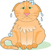 Soapy Cat. A marmalade cat that's not happy about having a bath stock illustration