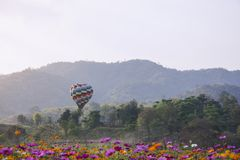 Soar of Beautiful Balloons in the back of cosmos flowers field w. Ith mountain background Royalty Free Stock Photography
