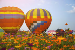 Soar of Beautiful Balloons on cosmos flowers garden with sky bac. Kground Royalty Free Stock Image