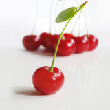 Soar cherry. Sweet and juicy soar cherry stock photo