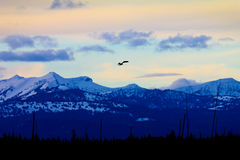 Soaring Bald Eagle Silhouette At Sunset. A soaring bald eagle casts an eerie silhouette against the breathtaking backdrop of the snow capped mountains in Stock Photo