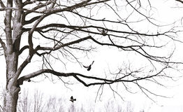 Soaring birds. In the trees in spring Stock Photo