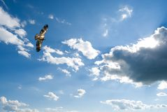 Soaring Eagle. Soaring immature bald eagle in the sky Royalty Free Stock Images