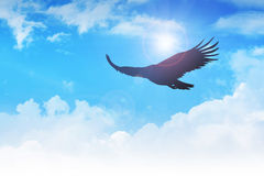Soaring Eagle Stock Image