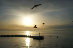 Soaring gulls in the Strait. Amid the foggy sunset Stock Images