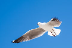 Soaring high up. Royalty Free Stock Images