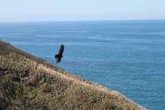 Soaring at the ocean. Bird flying over the water Stock Photos