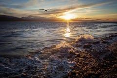 Soaring örn på solnedgången Arkivbilder