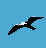 Soaring seagull in blue sky, seabird isolated on blue background Royalty Free Stock Photos