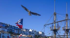 Soaring seagull Brixham Devon England UK Stock Images