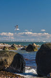 Soaring seagull over Baltic sea coast near Tallinn city Stock Photos