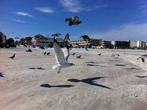 Soaring seagulls at New Smyrna Beach royalty free stock photos