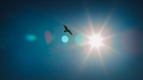 Soaring In The Sun Royalty Free Stock Photos