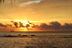 Soaring Sunrise. Beautiful sunrise with birds flying over the ocean Stock Images