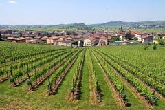 Soave en Italia, famosa por su vino y uvas Fotografía de archivo