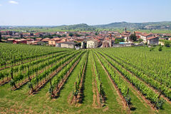 Soave in Italy, famous for its wine and grapes Stock Photography