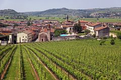 Soave in Italy, famous for its wine and grapes Royalty Free Stock Photos