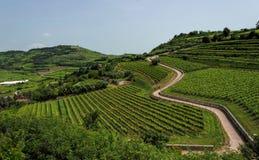 soave Vignobles sur la colline photo stock