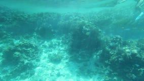 Sob a água vídeos de arquivo