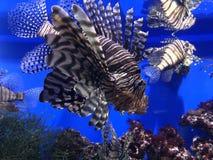 Sob a água do mar fotos de stock royalty free